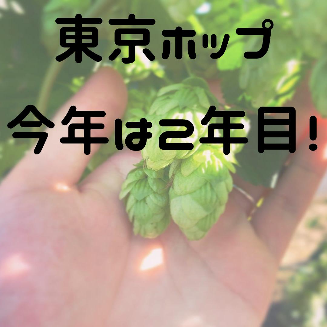 """【東京でホップを育てよう!プロジェクト】2年目の今年は""""3カ所""""でホップ育成!!!"""