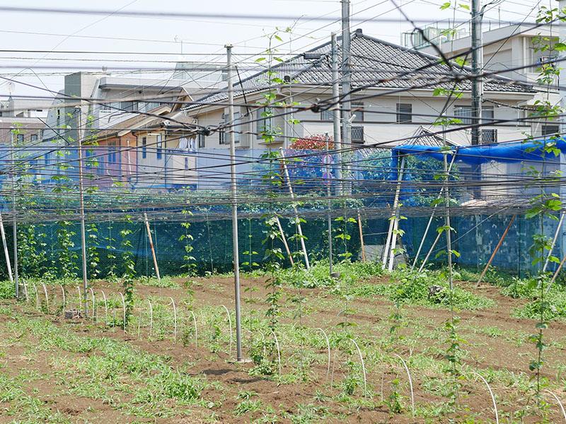 関前・大坂農園